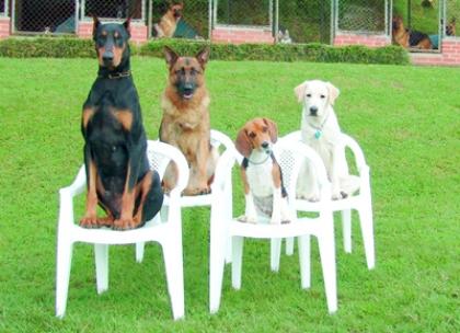 Abrigo temporário para animais é anseio de associação