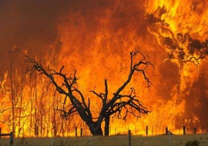 Município lamenta interrupção na vigilância e prevenção de incêndios durante a noite no distrito