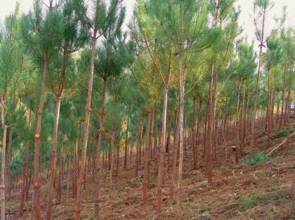 Câmara apoiou recuperação de 66 hectares de floresta