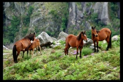 Brejoeira assinala Carnaval e Dia dos Namorados com passeios de cavalo e ensino de equitação