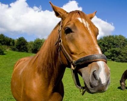 Passeio a cavalo reúne 80 pessoas num convívio