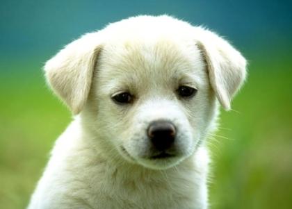 Selvagenial organiza Jantar solidário para pagar dívidas de processos clínicos de animais para adopção