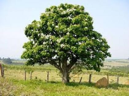 Câmara incentiva jovens a plantar árvores