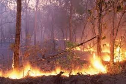 Duas mulheres detidas suspeitas de incêndio florestal