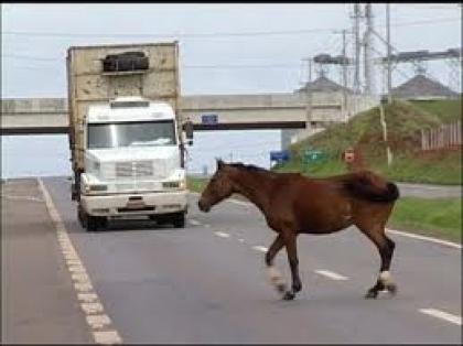 População alerta para gado à solta nas estradas