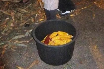 Monção: Lordelo recebe desfolhada tradicional minhota no próximo sábado