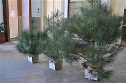 Monção: Bombeiros realizam campanha 'Pinheirinho de Natal'