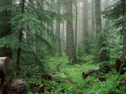 Valença: Câmara aposta na proteção da floresta contra incêndios