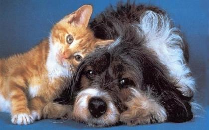 Cerveira: Aprovada proposta para regime especial de esterilização de animais de companhia
