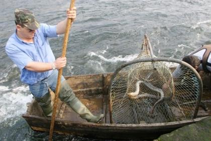 Seca: Primeiro mês de safra da lampreia no rio Minho rendeu menos de 4.700 capturas