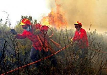 15.288 hectares arderam este ano