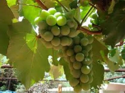Produtores negoceiam venda de Vinhos Verdes para os mercados sueco e norueguês