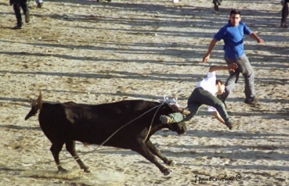 """""""Vacas das Cordas"""" deve passar para os sábados a partir de 2013 devido à suspensão dos feriados"""