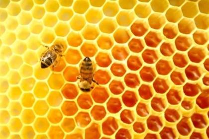 Crise leva a apicultura a siar do amadorismo e dar o salto para a professionalização