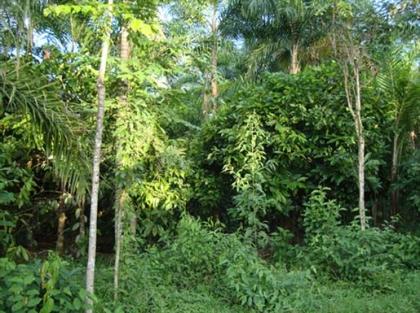 Executivo aprova Regulamento de Bolsa de Terras Agroflorestais