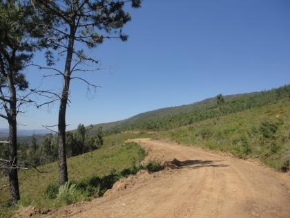 Concelho já conta com Equipa Municipal de Prevenção Florestal. Outros grupos poderão ser criados