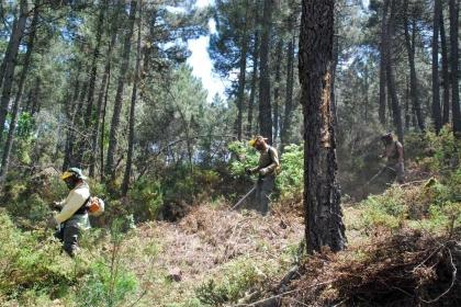 Desempregados e beneficiários do RSI estão a limpar a floresta