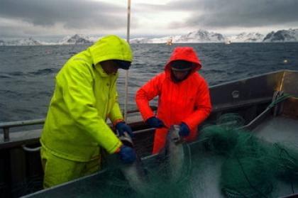 Município quer valorizar a pesca do bacalhau