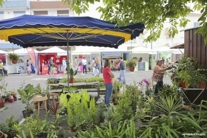 Âncora recebe Feira Agrícola e dos Produtos Tradicionais entre 23 e 25 de setembro